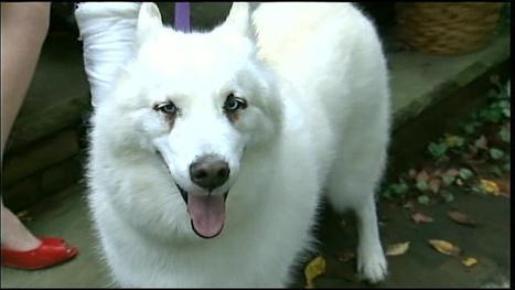 Dog tracks down ailing owner at hospital | Pet Sitter Picks | Scoop.it