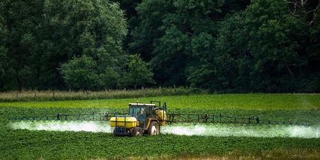 Pour la défense de la biodiversité, interdisons les insecticides néonicotinoïdes | Chronique d'un pays où il ne se passe rien... ou presque ! | Scoop.it