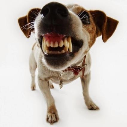 Dạy chó không cắn bậy - Thức ăn cho thú cưng | nanapet | Scoop.it