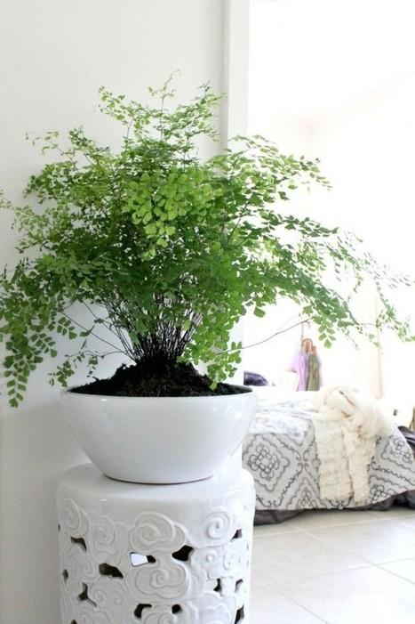 10 idées pour mettre des plantes dans son intérieur – Cocon de décoration: le blog | Décoration | Scoop.it