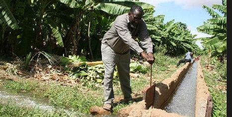 MPs suspend Sh14bn Galana irrigation plan | Local Grain News | Scoop.it