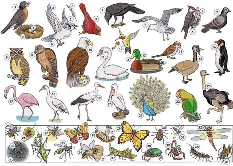 Birds and insects vocabulary PDF - Learning English vocabulary and grammar | Learning Basic English, to Advanced Over 700 On-Line Lessons and Exercises Free | Scoop.it