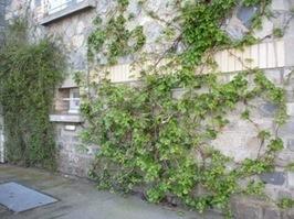 Vegetalisons nos murs et nos trottoirs | Jardins urbains | Scoop.it