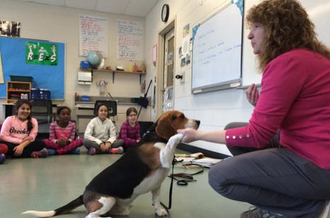 Pierrefonds: Un chien à l'école Perce-Neige pour réduire le stress   Beagle   Scoop.it