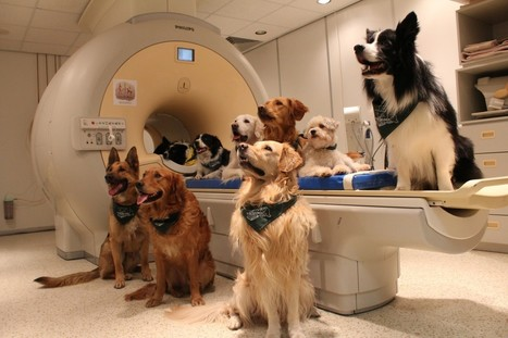 Your dog really does know what you're saying, and a brain scan shows how   Kool Look   Scoop.it
