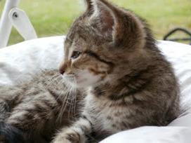 Advaita: Kitten gevonden in Spanje | Advaita | Scoop.it