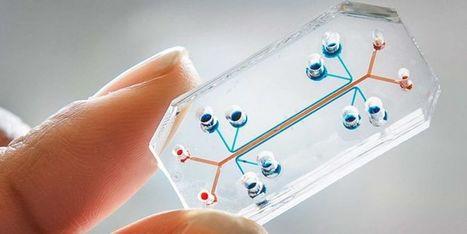 Une puce révolutionnaire capable d'imiter les organes du corps humain | ParisBilt | Scoop.it