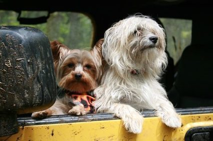 Top 5 American Dog Friendly Cities   Animal Bliss   Animal Welfare   Scoop.it