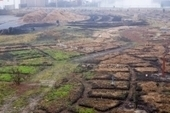 A Cohesive Urban Agriculture System Sprouts in Rotterdam – Next City | Sustainability & Community Resilience | Scoop.it