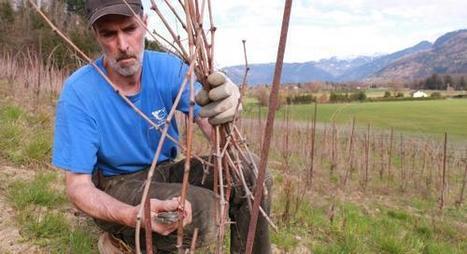 Vin d'Ayze : « On pourrait augmenter les surfaces mais il faut les trouver ! »   IRWT - Vins de Savoie & du Bugey   Scoop.it