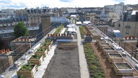 « Paris se mange ! » : 20 lieux incontournables de l'agriculture urbaine | Agriculture urbaine et rooftop | Scoop.it