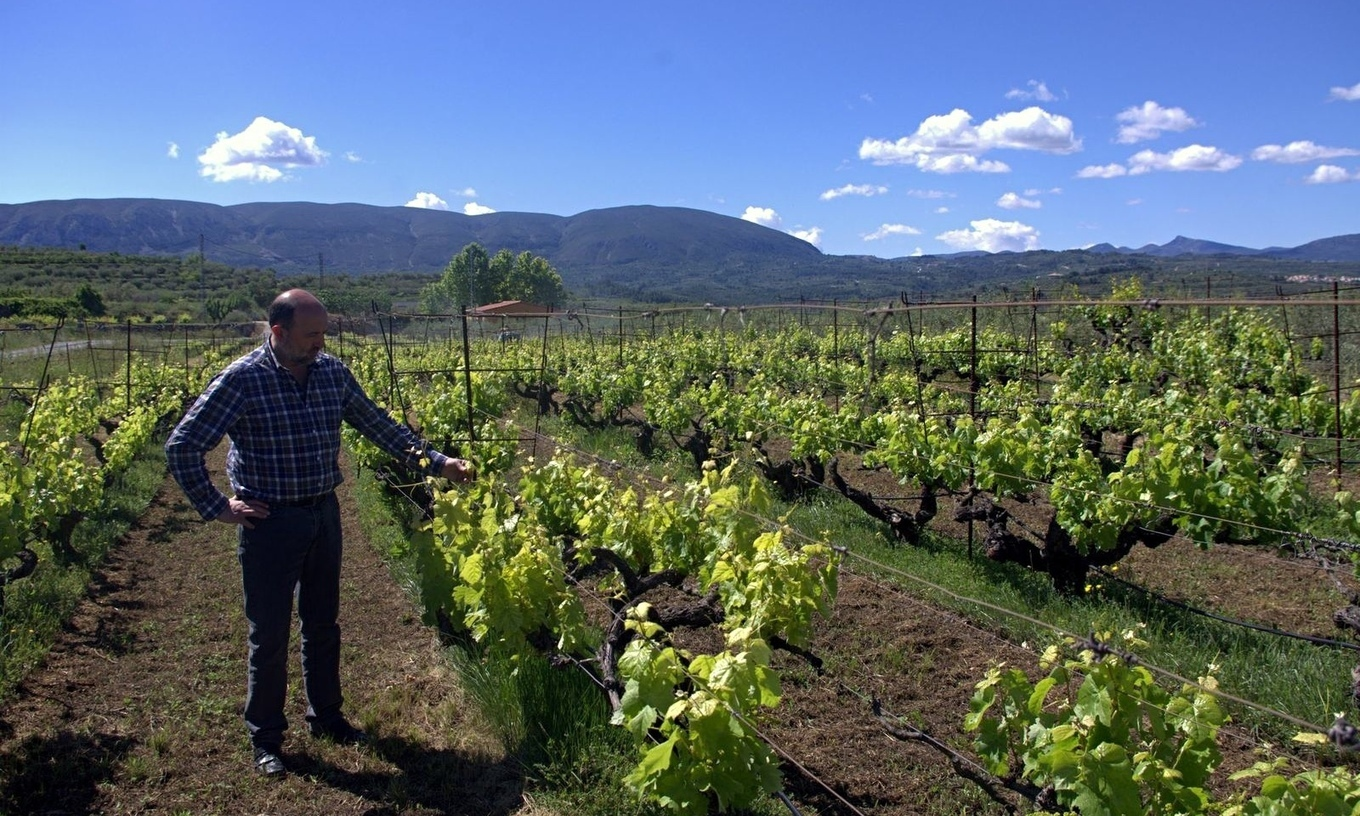 Microvinyas: ethical vineyards producing wine f...