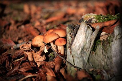 Il Prodotto del Mese di Ottobre – i Funghi | Cibando Blog: tutto quello che c'è da sapere sul mondo del food | Best Food&Beverage in Italy | Scoop.it