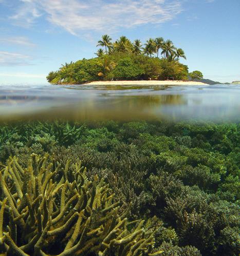 Diseases loom large for tropical corals | Aquatic Viruses | Scoop.it