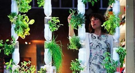 Guía: cuándo cosechar y cómo secar hierbas para tu cocina | Educacion, ecologia y TIC | Scoop.it