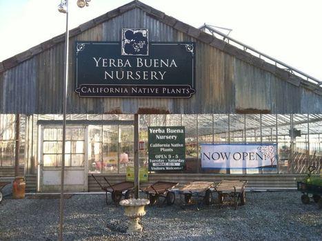 After 50 years, Yerba Buena Nursery has moved. | The Blogging Nurseryman by Trey Pitsenberger | Annie Haven | Haven Brand | Scoop.it
