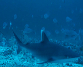Expedition Uncovers Seafloor Mountain | Food for Pets | Scoop.it