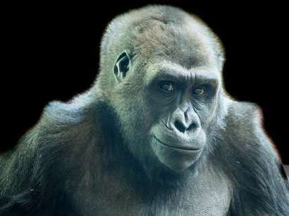 The amazing emotional intelligence of our primate cousins | Empathy and Animals | Scoop.it