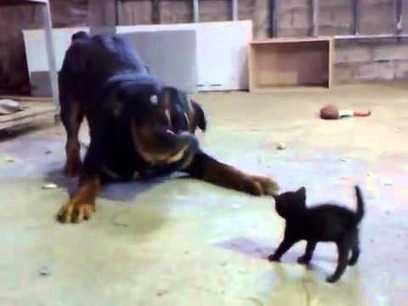Brave Kitten Stands Up to Dog | DirectPayBiz | Scoop.it