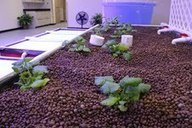 Aquaponics System Brings Healthy Food to Local Areas - AquaTucker   acuaponia,sinergia de hidroponia y acuicultura   Scoop.it