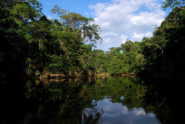 How Crowdfunding Saved 722 Square Miles of Rainforest   The Collaborative Society   Scoop.it