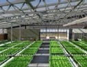 Mega-Farms to Hit City Rooftops | Coordenadas | Scoop.it