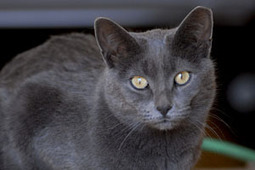Fuzzy math on cats, birds clouds highly questionable 'study' | NYC's Animals | Scoop.it