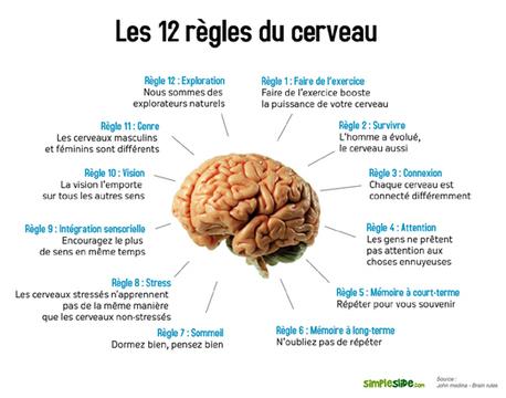 Comment fonctionne le cerveau humain (et comment en tirer parti) | Neurosciences et psycho | Scoop.it