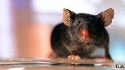 #Mice #sing#songs | Le It e Amo ✪ | Scoop.it