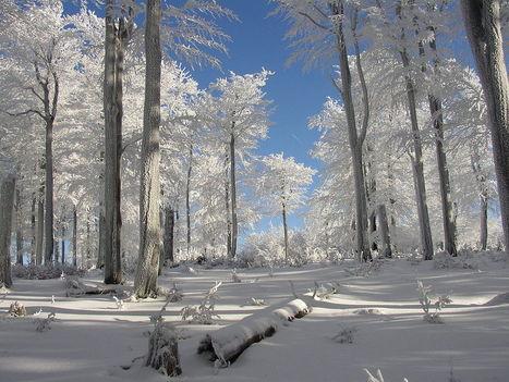Los árboles de los bosques europeos presentan una amplia biodiversidad | Actualidad forestal cerca de ti | Scoop.it