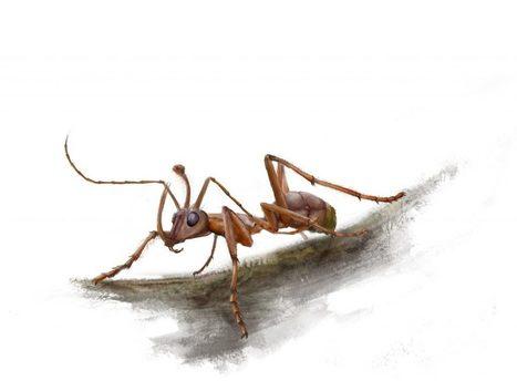 Une étrange fourmi-licorne de 99 millions d'années | Aux origines | Scoop.it