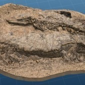Smithsonian 3D Prints Whale Fossils  - Before roadworks destroy | 3d printers and 3d scanners | Scoop.it