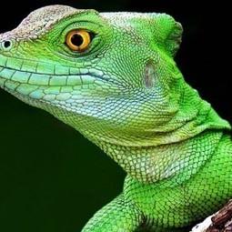 Amphibians | Evolution's Prime | Scoop.it