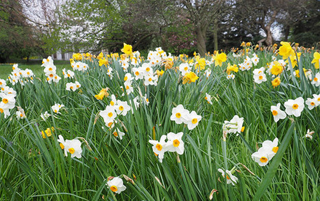 The colours of Spring in Ruskin Park, south London - BrixtonBuzz | Lambeth | Scoop.it