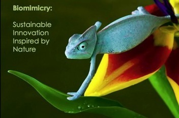 Nature's Knack | TEDtalk | The Next Edge | Futurable Planet: Answers from a Shifted Paradigm. | Scoop.it