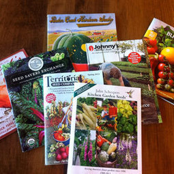 Top 10 Tips for Buying Seeds from Catalogs: Organic Gardening | Annie Haven | Haven Brand | Scoop.it
