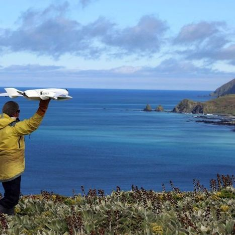 Calls to protect animals from drones | Drone (UAV) News | Scoop.it