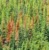 NASA: Landsat senses disturbance in U.S. Pacific Northwest forests | Timberland Investment | Scoop.it