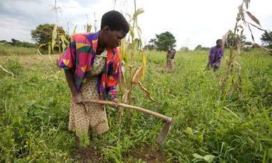 Farming could be key to solving youth unemployment in Africa | Development | Scoop.it