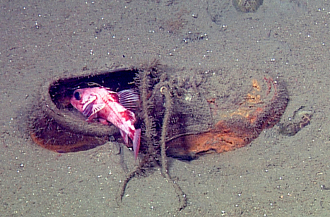Life on the Ocean Floor Garbage Patch: Photos : DNews   Sustain Our Earth   Scoop.it