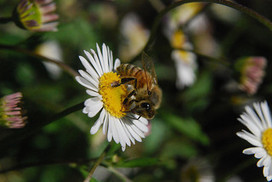 Hollow Bee Hives May Threaten Our Lives Too | Sustain Our Earth | Scoop.it