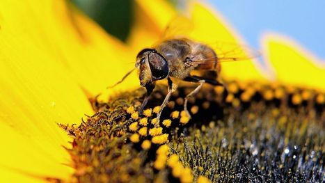 Allergiques au pollen: les premiers symptômes se font ressentir - RTBF Societe   Steribed   Scoop.it