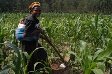 Afrique : les raisons du déficit d'innovation - Afrik.com | Développer l'industrie agroalimentaire en Afrique | Scoop.it