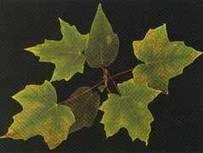 Deficiencia de Nitrógeno, Fósforo y Potasio:. | buenas practicas agrícolas | Scoop.it