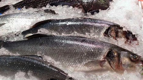 Seafood import drops by 12% on CBN forex policy | Aquaculture Directory | Aquaculture Directory | Scoop.it