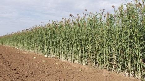 Italia leader del bio in Europa: un miliardo di export, tre di giro d'affari | Agricoltura sostenibile | Scoop.it