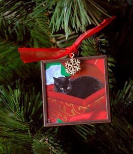 Cat Christmas Ornaments: Black Cat In A Box | Deborah Julian Art | Christmas Cat Ornaments and Cards | Scoop.it