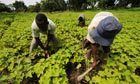 Biofuels boom in Africa as British firms lead rush on land for plantations | Geography | Scoop.it