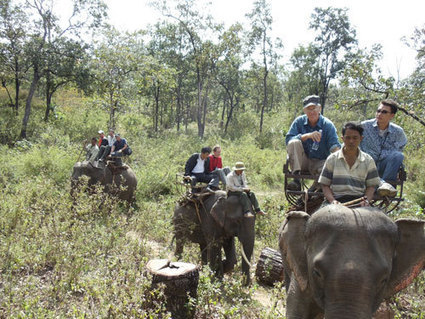 No one can save Vietnam's elephants? | The Wild Planet | Scoop.it