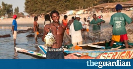 Tackling illegal fishing in western Africa could create 300,000 jobs | Green economy | Scoop.it